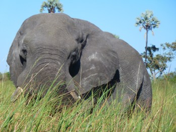 Elephant. Photo by Maureen Littlejohn.