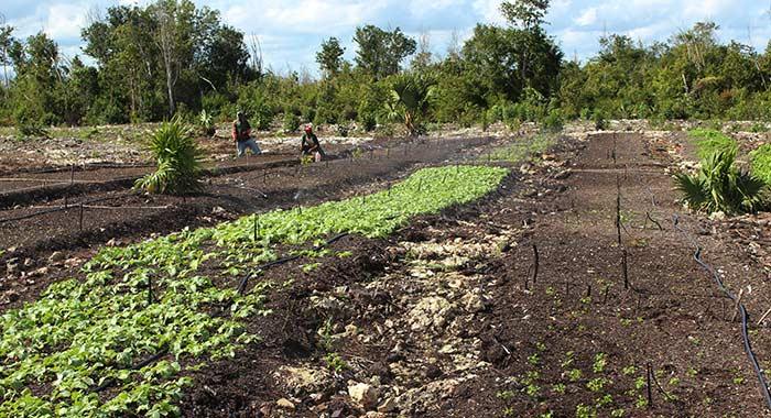 ethos farm in the Mexican rainforest