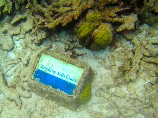 "Buck Island: ""Touching Kills Coral"" sign. Photo Credit: Debbra Dunning Brouillette"