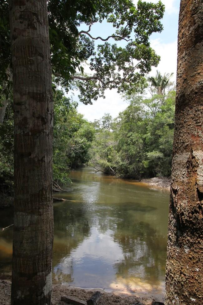 A deceivingly serene visage of a deadly river. Photo Credit: Jeffrey Lehmann