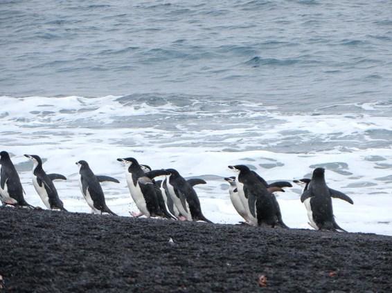 Penguins dress to impress. Photo Credit: Deborah Stone