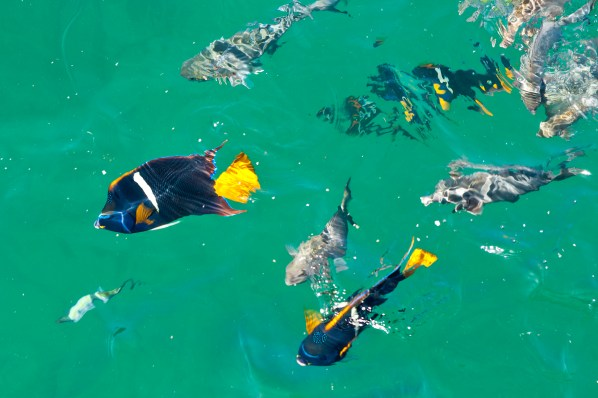 Colorful fish at the Isla Marietas National Park
