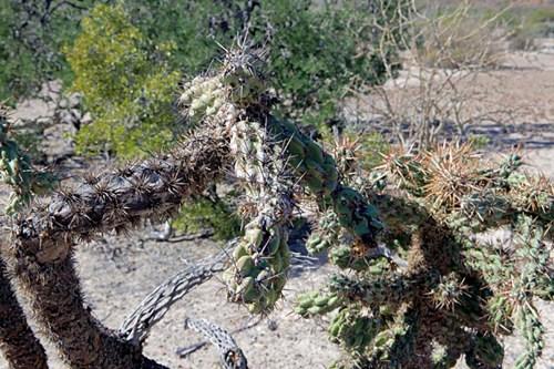 Cactus in Baja California Sur, Mexico