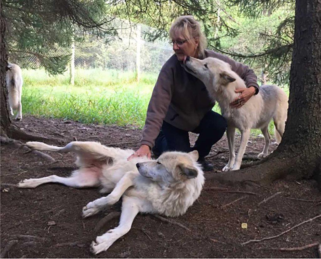 Meeting the Aventuraid wolf pack