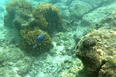 Swimming with fishes in the Sea of Cortez