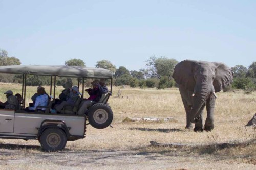 Land Rover and Elephant (photo by Tom Schwab)