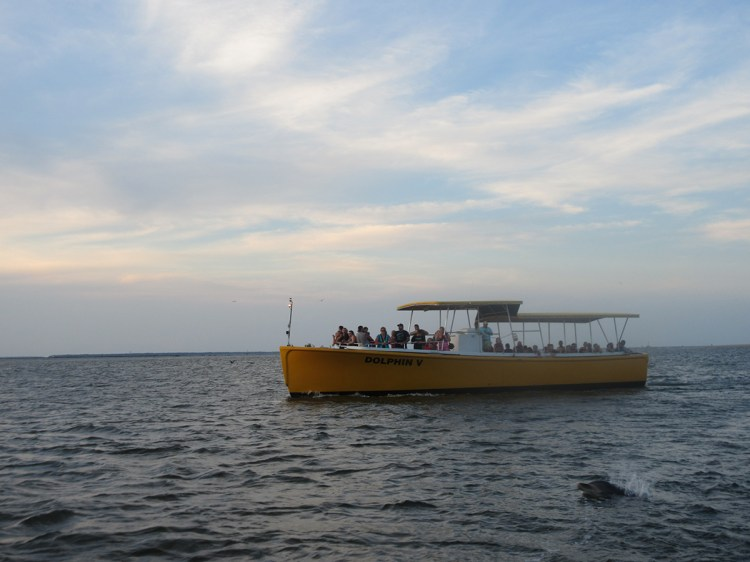 Dolphin Cruise. Photo by Cindy Ladage