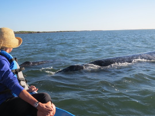Whale watching at Lopez Mateos is a highlight of a trip to Baja.Photo by Deborah Stone