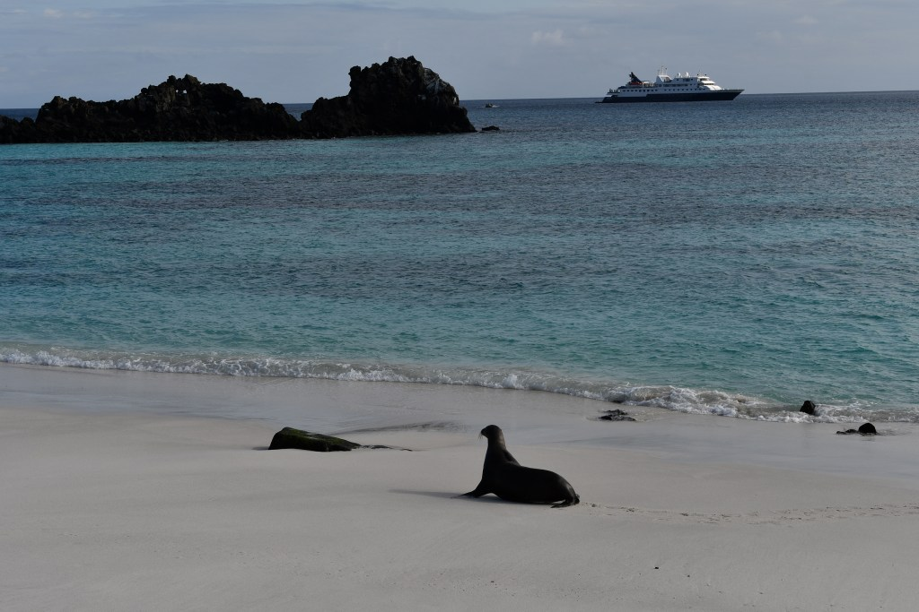 Pristine Gardner Bay Beach with Sea Lion with Turtle Rock and Celebrity's Xpedition ship in the background.