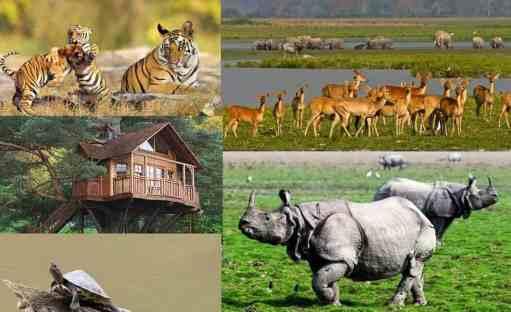 Kaziranga National Park, Assam - Timing, Attaraction, How to Reach