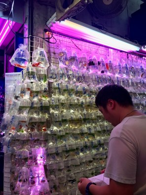 Fish market wall Mongkok