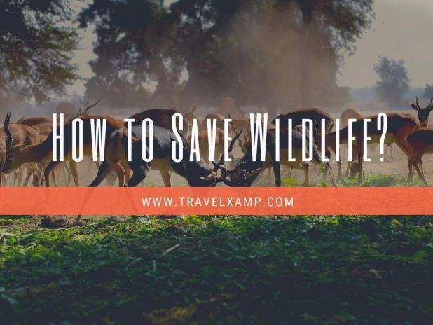 How to Save Wildlife?