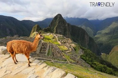 Llama hanging out at the Machu Picchu complex