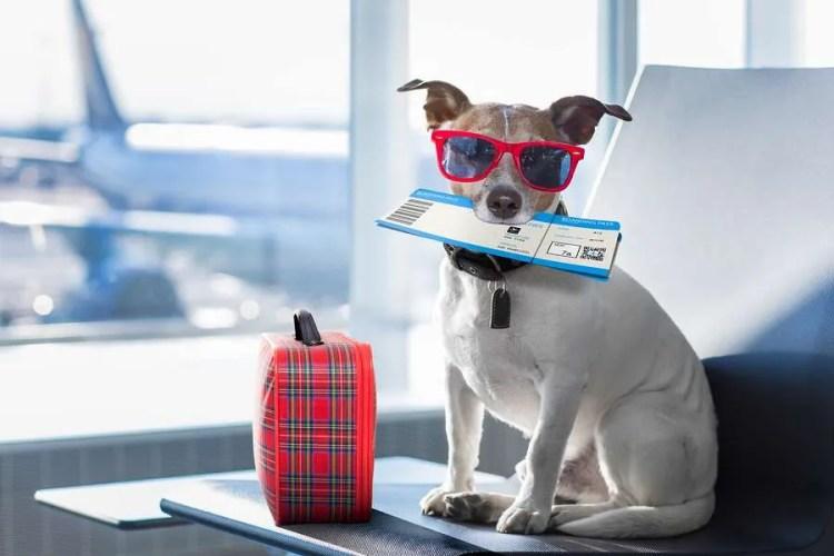 travel pup