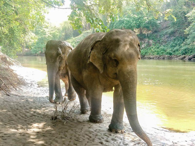 Elephants ready for bathing Thailand