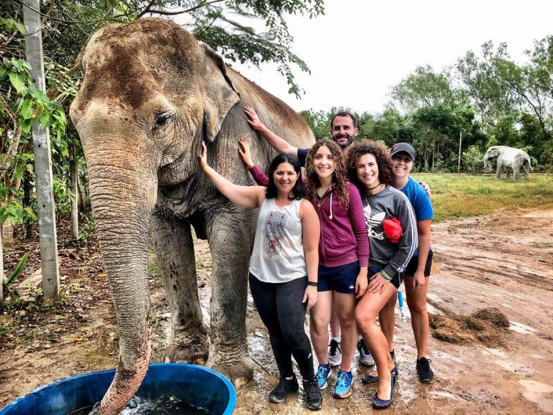 Hip hip hooray for elephants Thailand