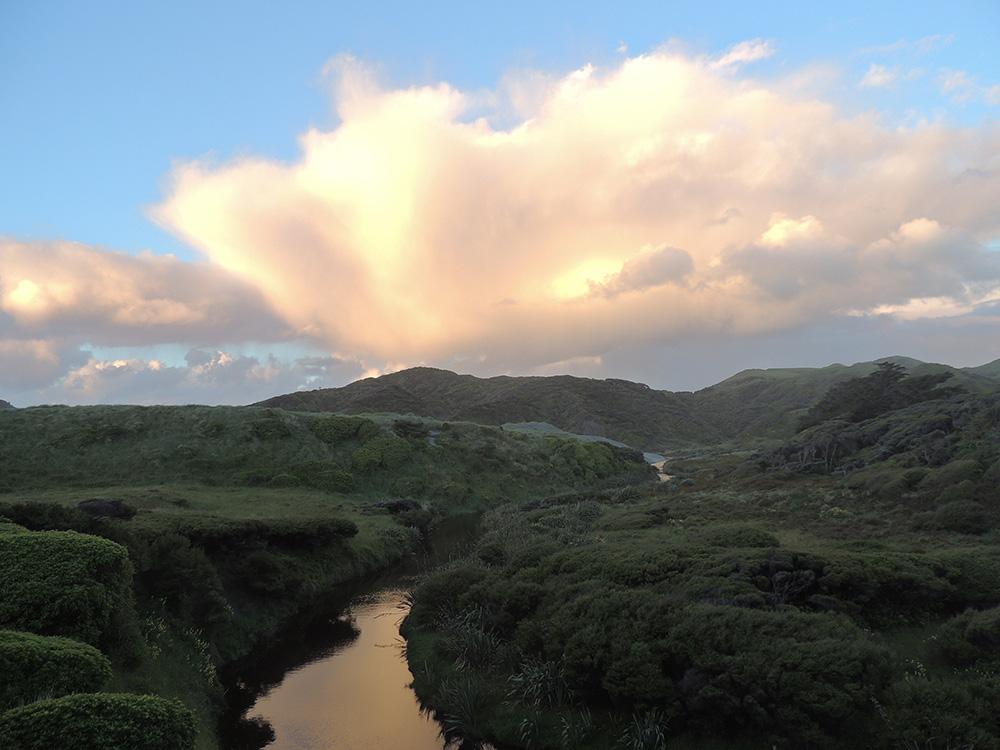 PVT Nouvelle-Zélande - Bush de Whariki Beach