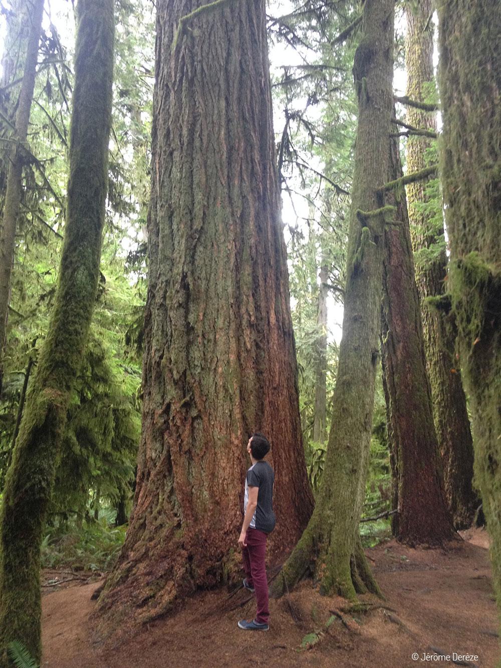 Visiter Île de Vancouver - Cathedral Grove