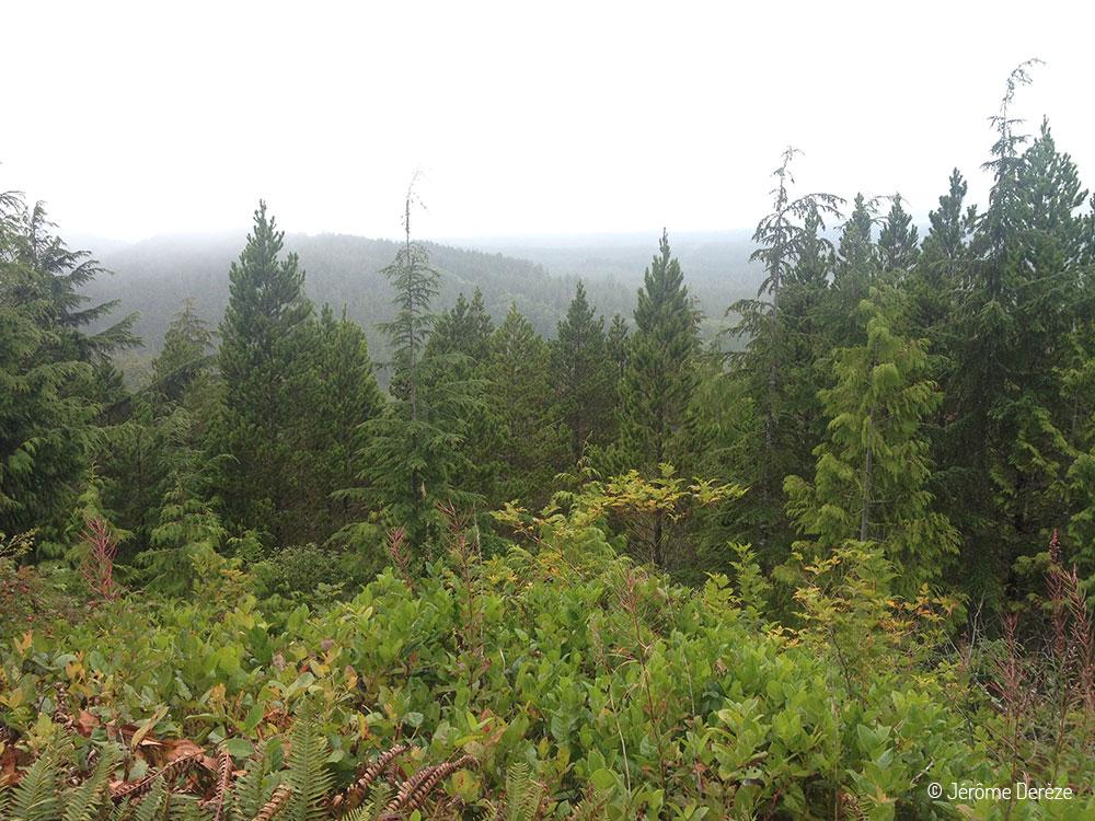 Visiter Île de Vancouver - Randonner dans le parc national Pacific Rim