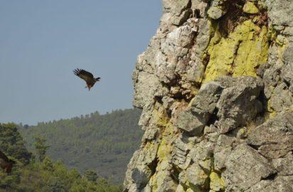 Avistamiento de fauna en su hábitat natural, ¿lo estamos haciendo bien?