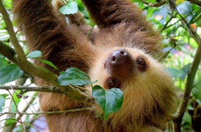 New Instagram warning educates users about cruelty from wild animal selfies