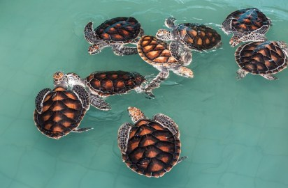 Responsible travel raises questions about turtle hatcheries