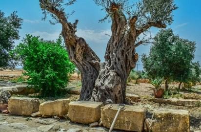Convivir con la tierra: lecciones aprendidas de Local Food Experts, en Creta