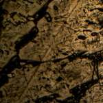 Resorcinol by Light Microscopy