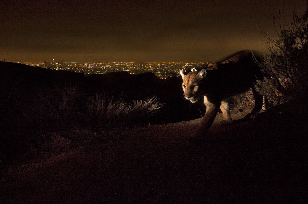 Griffith Park National Geographic