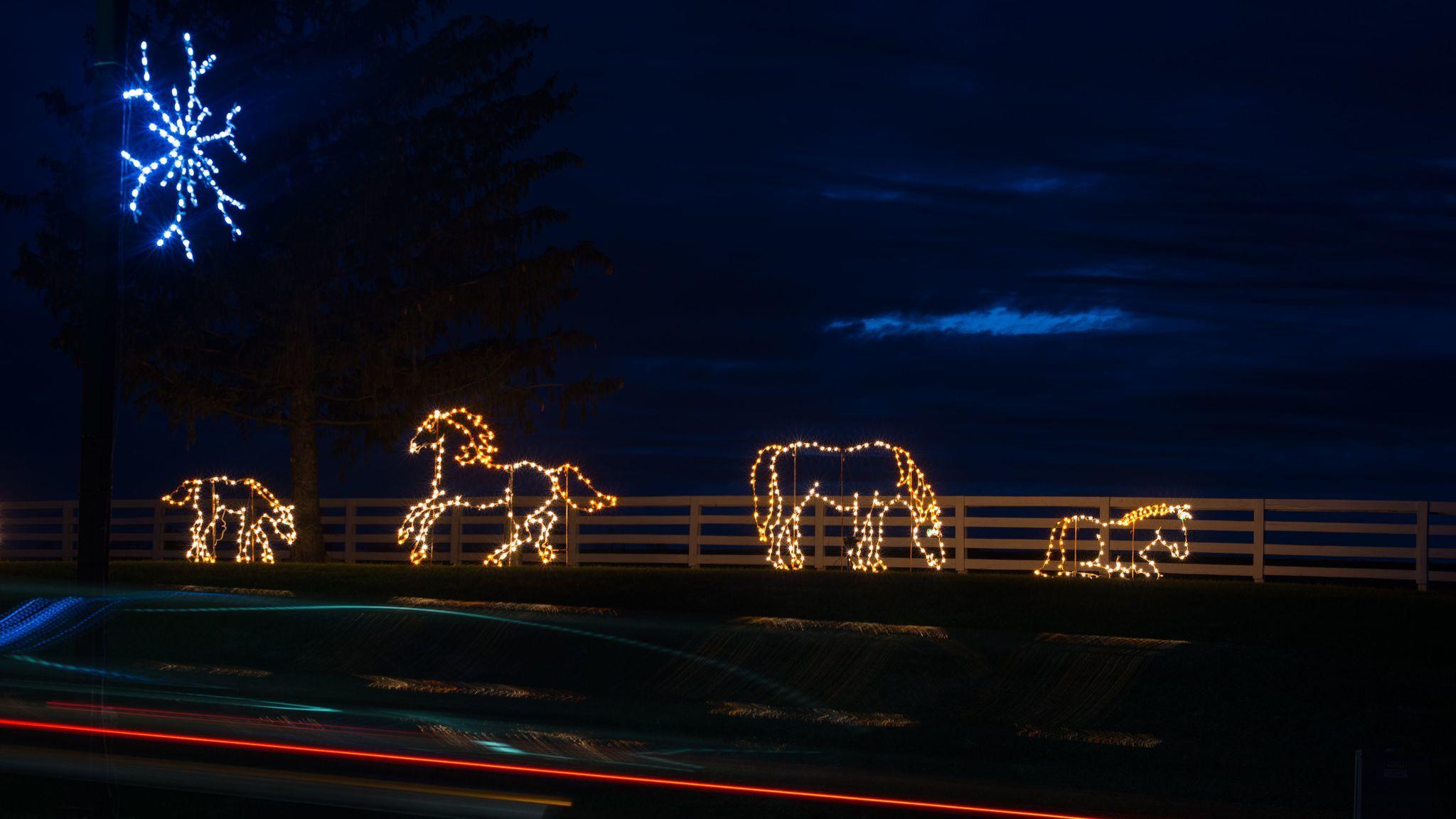 La Zoo Lights Times