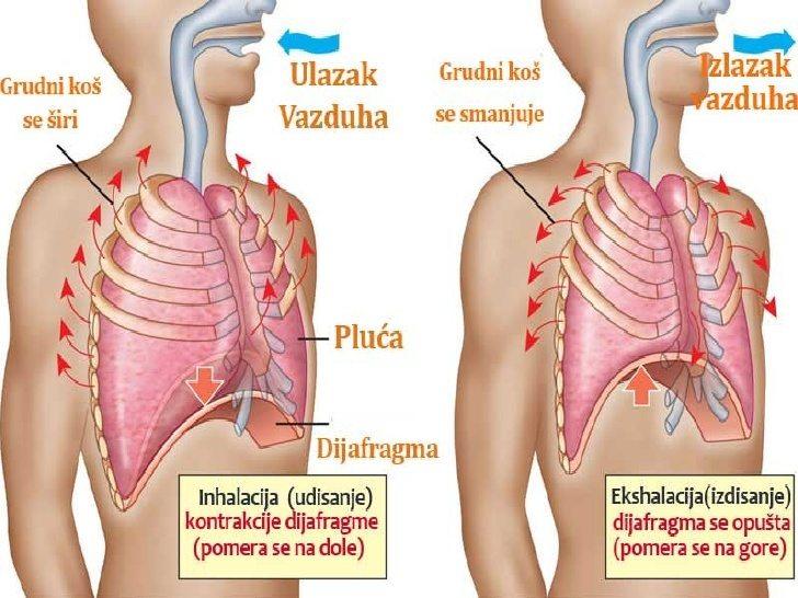 disanje dijafragma