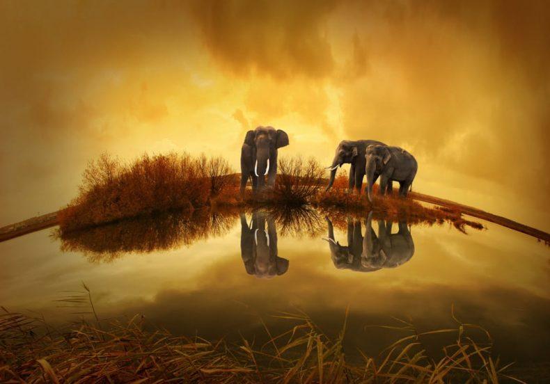 otkucaj srca kod slona je 30