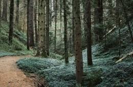 trail trčanje u jesen