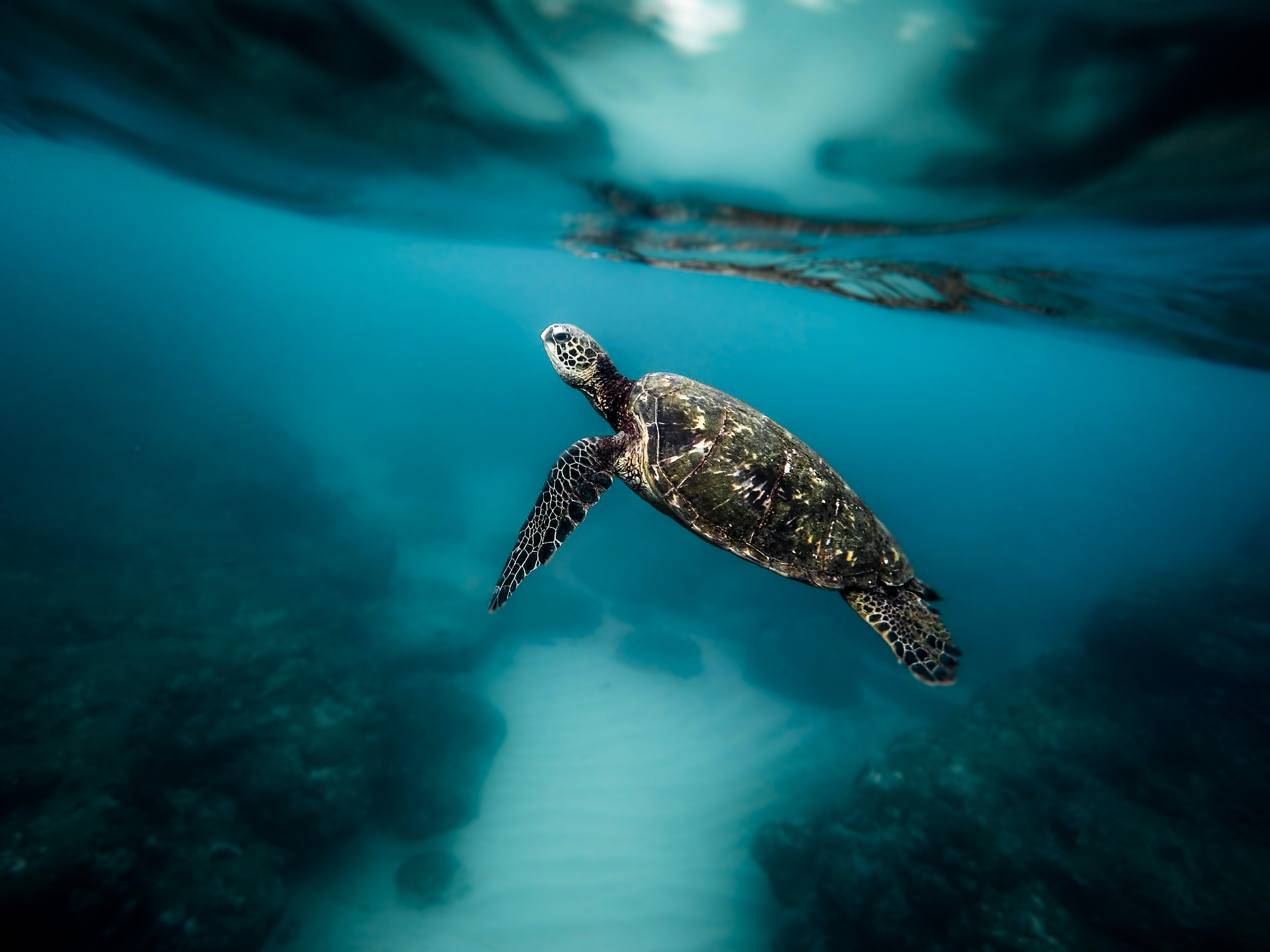 Sea Turtle Conservancy Treadright