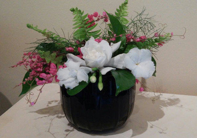 The Shrub Queen: Jungle Gardenias
