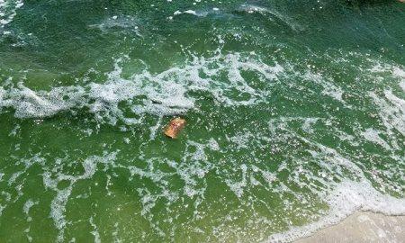 Green Toxic Algae in Stuart
