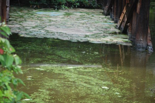 Toxic Algae State of Emergency!