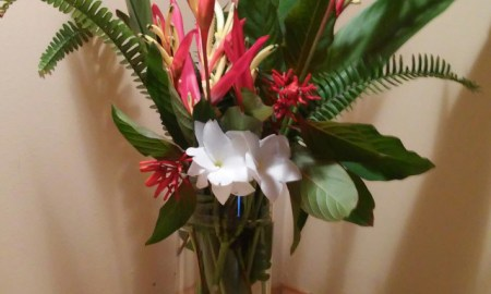 The Shrub Queen: Heliconia Overload