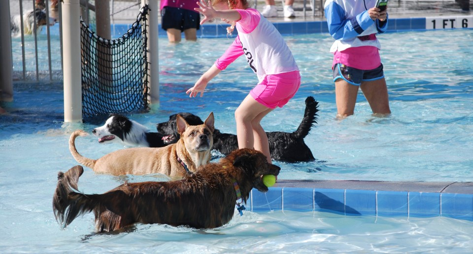 3rd Annual Pooch Plunge at Sailfish Splash in Martin County to benefit the Humane Society