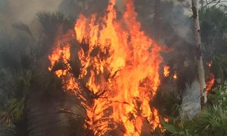 Big Brush Fire in St Lucie County