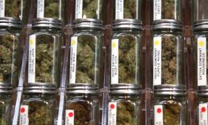 Florida Medical Marijuana Update June 25,2017