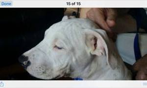 OCSOAC seek owner of puppy with broken jaw and multiple fractures