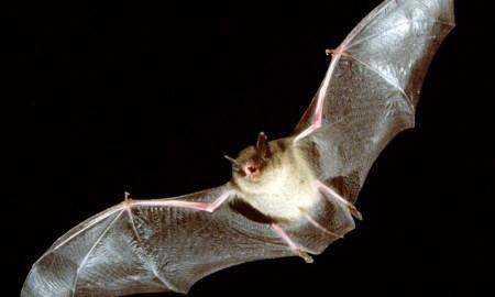 Bat-tastic Night Out: Bat Detecting Basics
