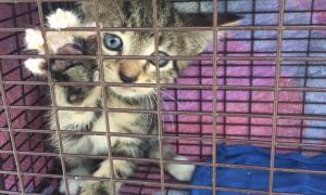 Stuart PD rescues kitten