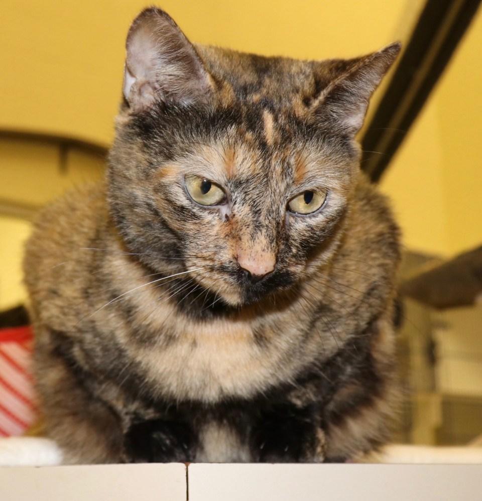 HSVB/IRC Pets of the Week Dec 7 Photo :Marlen Hurter