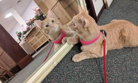 HSTC Pet of the week Dec 8