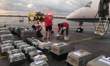 photo: st lucie fire200 dogs rescued from hurricane damaged Caribbean
