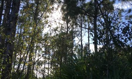Ten minute dog walk: Halpatiokee Regional Park