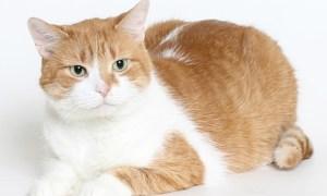 HSTC Pet of the week Jan 17: TJ