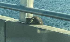 Kitten saved from ledge on Roosevelt Bridge